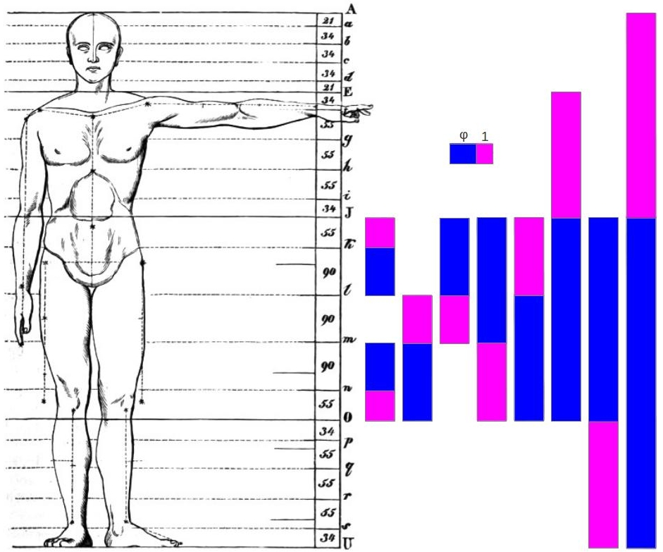 d4243a42926b0 Figure 1  Golden proportions in the human body found by Zeising  1 .
